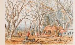 Indian sugar camp, eastman